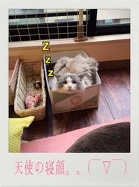 寝顔_2711.JPG
