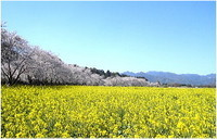 shizen-002.jpg
