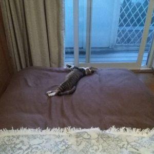 【八王子】猫ひろいました