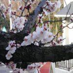 【横浜校】桃の節句に思う事