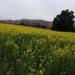 ベリメリの春はチャレンジの季節