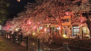 【京都校】夜のお花見