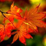 【京都校】もう秋ですね!