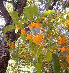 秋の匂い_1