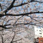 【横浜校】桜満喫しました