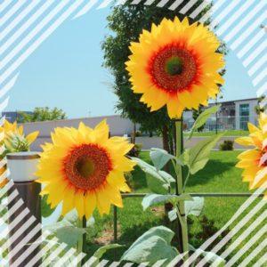 【高田馬場校】熱い夏になりそうな予感