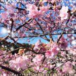 【新宿校】花粉症の季節がやってきました