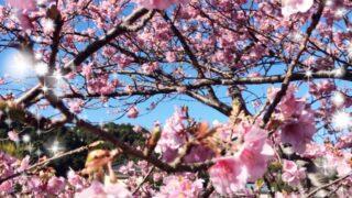【高田馬場校】花粉症の季節がやってきました