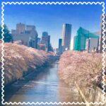 【新宿校】お花見日和☆