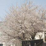 【横浜校】うららかな春のひととき