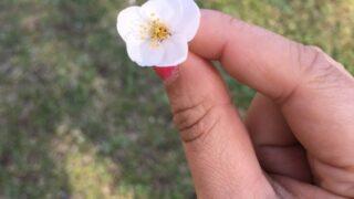 【八王子校】肌寒い日のお花見