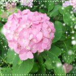 【高田馬場校】紫陽花に癒されてます☆
