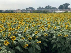 【名古屋校】夏の思い出