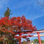 【高田馬場校】紅葉を見に行こうよう!!