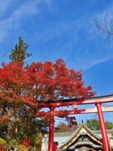 【新宿校】紅葉を見に行こうよう!!
