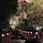 【京都校】紅葉ライトアップ!