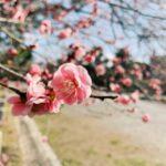 【京都校】新しい季節